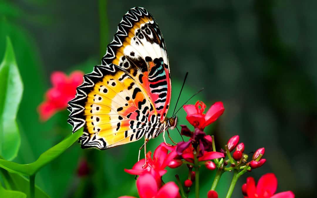 Setzt auf einen romantischen Spaziergang im Zanzibar Butterfly Centre!